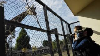 京都市動物園キリン