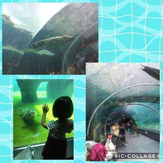 子連れ旅行札幌市円山動物園ホッキョクグマ館水中トンネルアザラシ