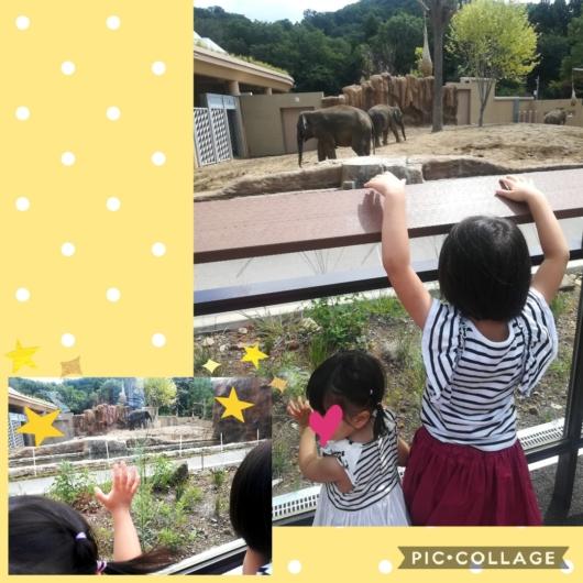 子連れ旅行札幌市円山動物園ゾウ舎