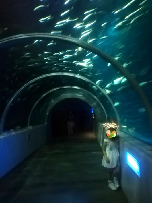 登別マリンパークニクスニクス城アクアトンネル