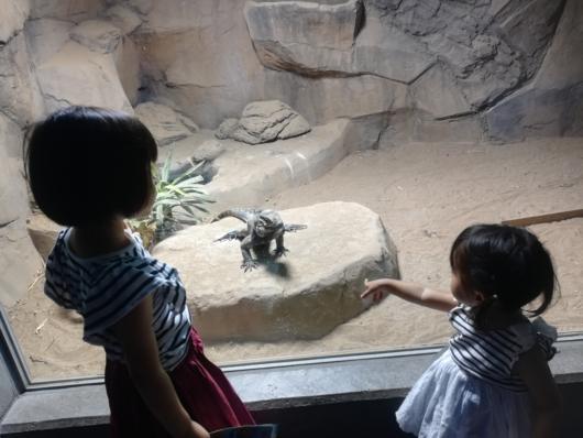 子連れ旅行札幌市円山動物園は虫類・両生類館イグアナ