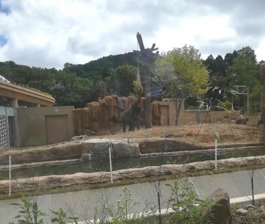 子連れ旅行札幌市円山動物園ゾウ舎えさをたべるところ