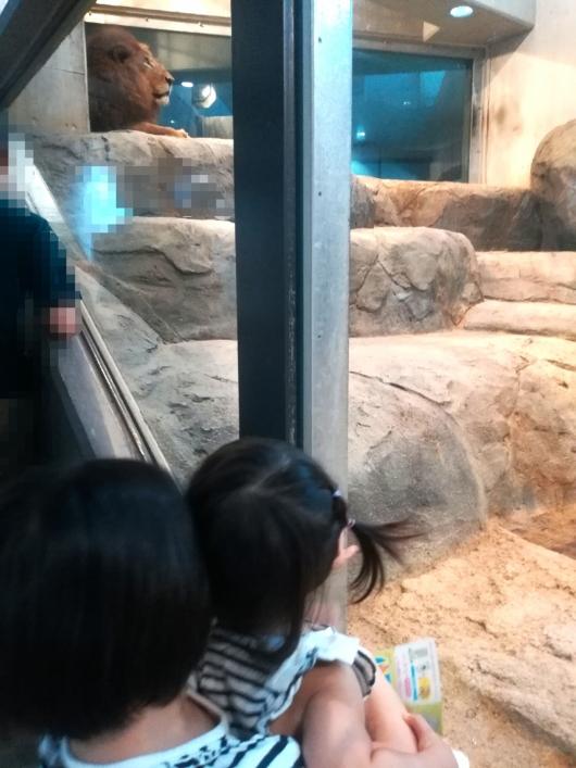 子連れ旅行札幌市円山動物園ライオン