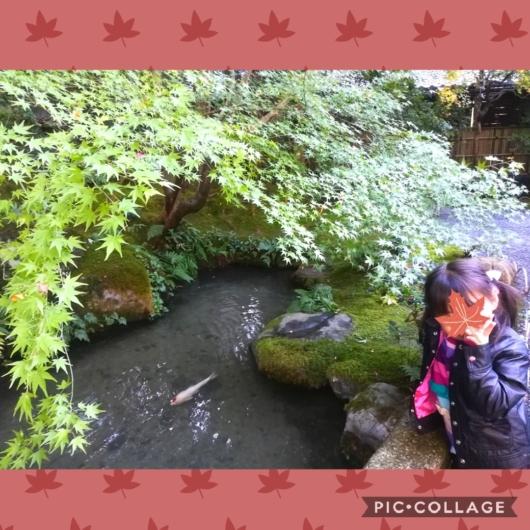 子連れ旅行京都瑠璃光院鯉