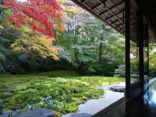子連れ旅行京都瑠璃光院瑠璃の庭紅葉2018年11月中旬