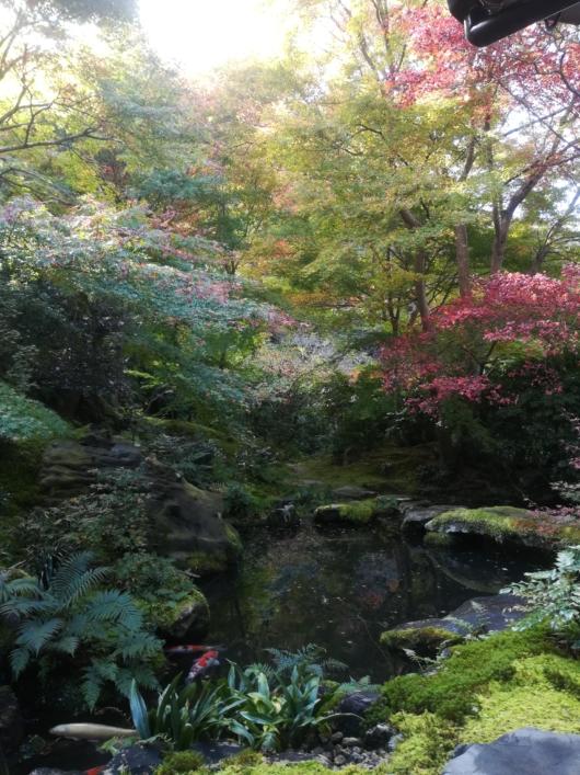 子連れ旅行京都瑠璃光院臥竜の庭紅葉2018年11月中旬