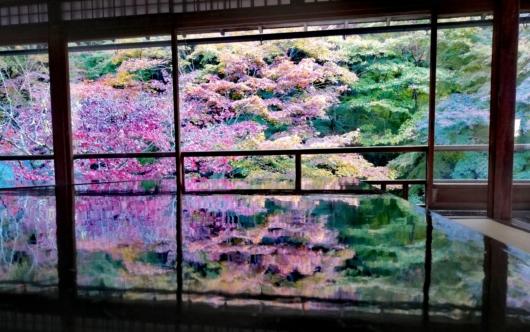 子連れ旅行京都瑠璃光院床もみじ紅葉