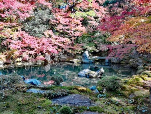 子連れ旅行京都紅葉蓮華寺庭