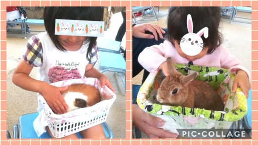 王子動物園ふれあいタイムうさぎモルモット5歳1歳