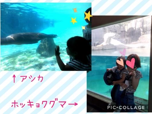 王子動物園アシカホッキョクグマ