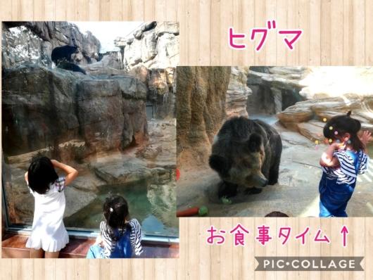 王子動物園クマお食事タイム