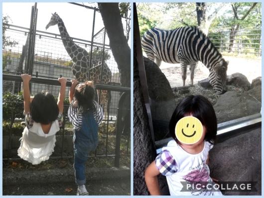 王子動物園キリンシマウマ