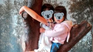 王子動物園コアラになりきれるインスタ映えスポット