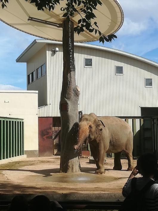 王子動物園水浴びするゾウ