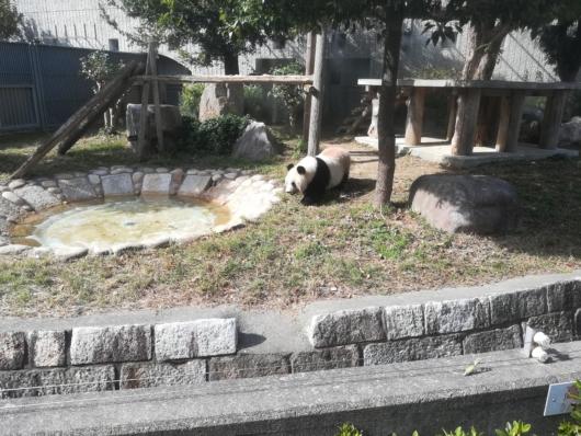 王子動物園パンダ餌を食べる台