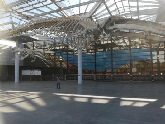 子連れお出かけ子連れ旅行大阪市立自然史博物館クジラ巨大な化石