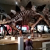 子連れお出かけ子連れ旅行大阪市立自然史博物館ステゴサウルス化石