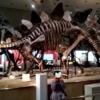 【大阪市立自然史博物館】安い!知育にいい!恐竜の巨大な化石に大興奮♪