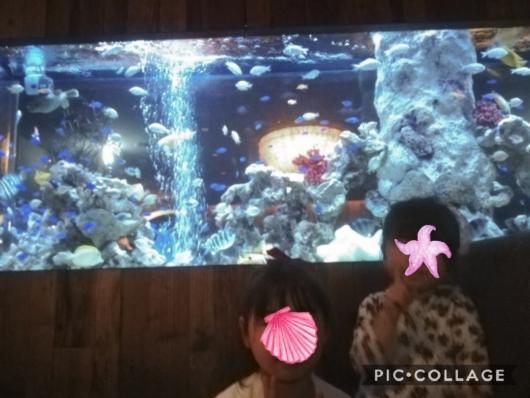 子連れ外食アクアリウム&魚イタリアン心斎橋ライム席の横の水槽5歳2歳