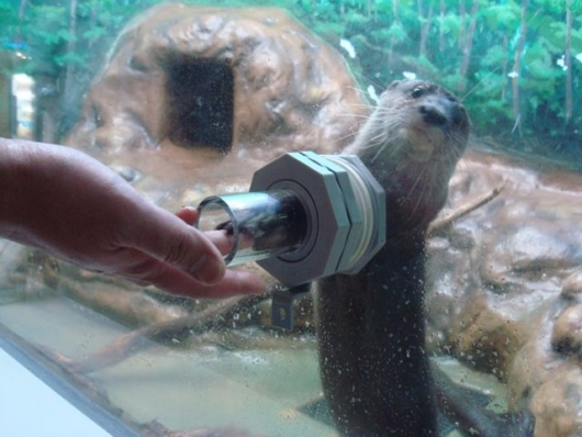 新さっぽろサンピアザ水族館飼育員日記カワウソ