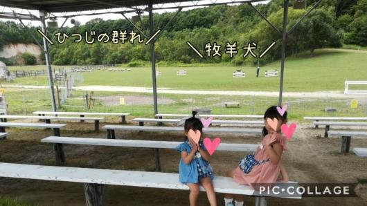 子出かけ子連れ旅行北海道恵庭えこりん村みどりの牧場牧羊犬ひつじの群れシープドッグ5歳2歳