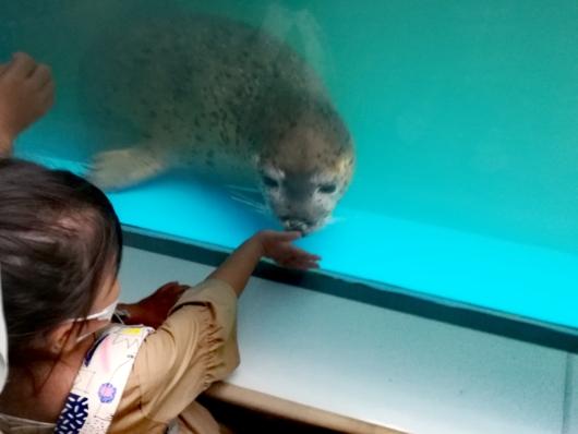 子出かけ子連れお出かけ子連れ旅行新さっぽろサンピアザ水族館アザラシ人懐っこい寄ってくる