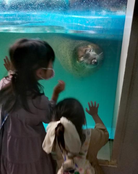 子出かけ子連れお出かけ子連れ旅行新さっぽろサンピアザ水族館アザラシ人懐っこい寄ってくるかわいい
