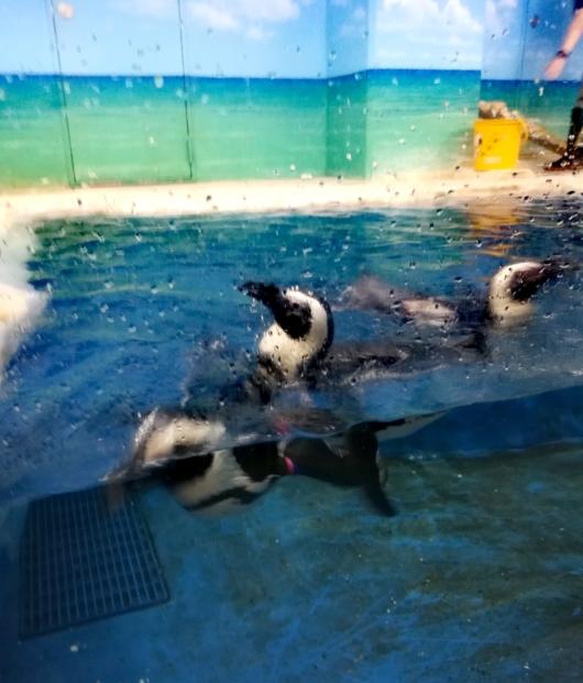 子出かけ子連れお出かけ子連れ旅行5歳2歳新さっぽろサンピアザ水族館泳ぐペンギン
