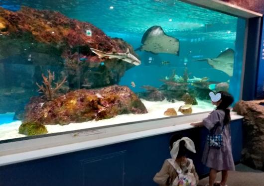 子出かけ子連れお出かけ子連れ旅行5歳2歳新さっぽろサンピアザ水族館回遊水槽エイサメ