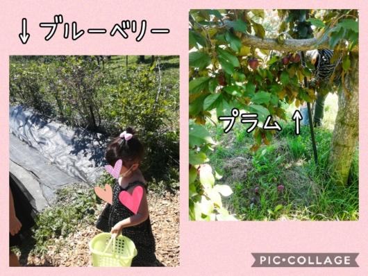 子出かけ子連れ旅行お出かけ北海道余市山本観光果樹園果物狩り夏休み5歳2歳ブルーベリープラム