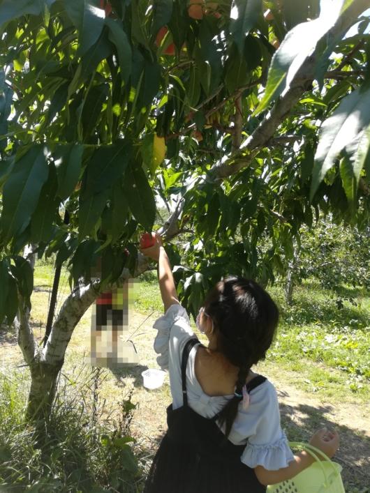 子出かけ子連れ旅行お出かけ北海道余市山本観光果樹園果物狩り桃夏休み5歳