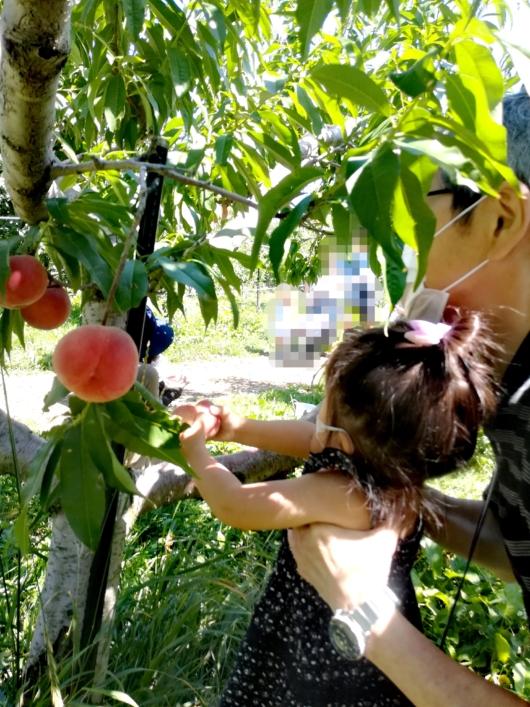 子出かけ子連れ旅行お出かけ北海道余市山本観光果樹園果物狩り桃夏休み2歳
