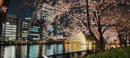 桜お花見夜桜2021年南天満公園大阪北浜中之島水辺の桜噴水