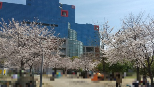 桜開花状況2021年大阪扇町公園子連れお花見遊具