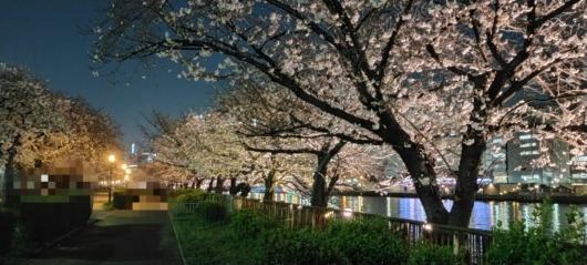 桜お花見夜桜2021年南天満公園大阪北浜中之島水辺の桜