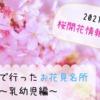 【2021年桜開花情報@大阪】子連れで行ったお花見名所~乳幼児編